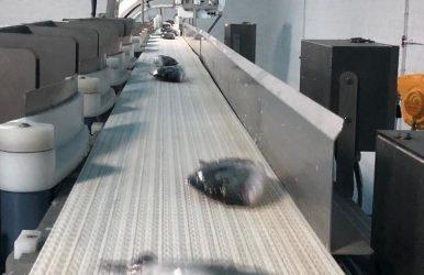 Produits pour le traitement et la transformation du poisson